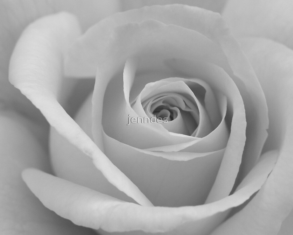 Yellow Rose - Black & White by jenndes