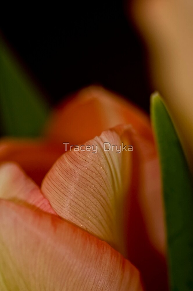 Petal Power! by Tracey  Dryka