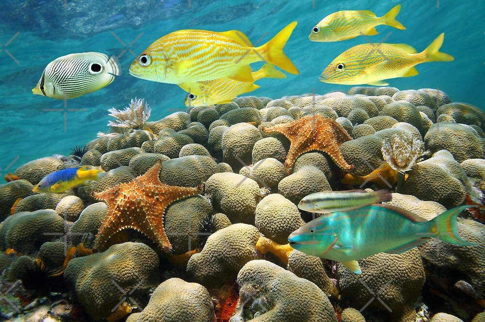 Starfish and tropical fish in a coral reef by Dam - www.seaphotoart.com