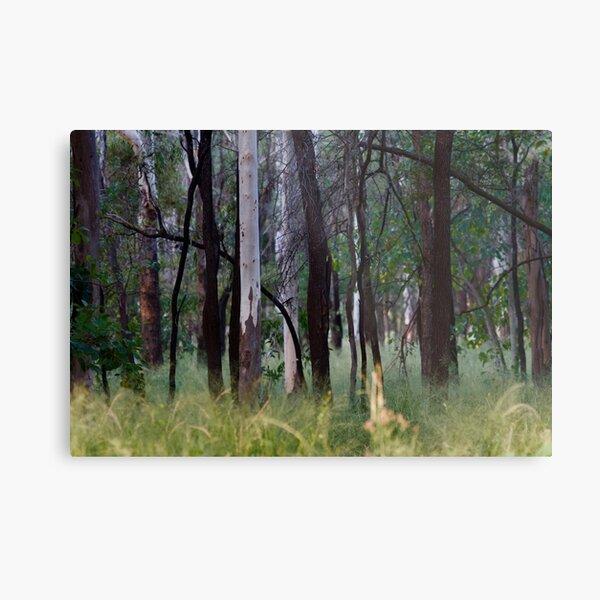 Forest walk  Metal Print