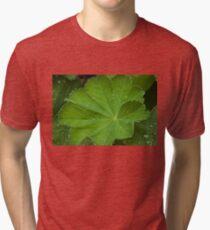 Dew Drops On Lady's Mantel Leaf  Tri-blend T-Shirt