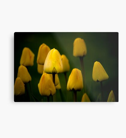 Yellow Tulip #2 Metal Print