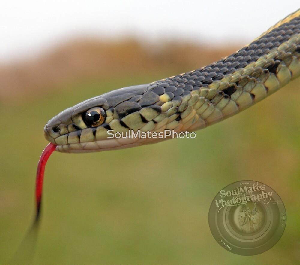 Snake by SoulMatesPhoto