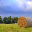 Rolled Hay  by Eugenio