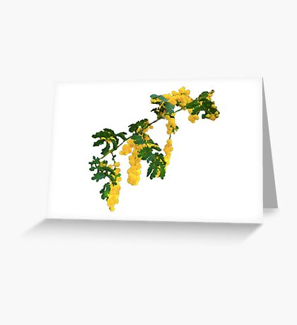 Wattle Fever - White Greeting Card
