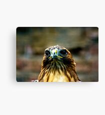 Hawk #2 Canvas Print