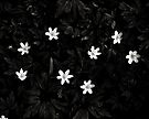 Constellation of spring harbingers  by clickinhistory