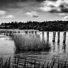 McCormack's Beach Provincial Park in Black & White by kenmo