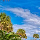 Palms and Clouds by TJ Baccari Photography