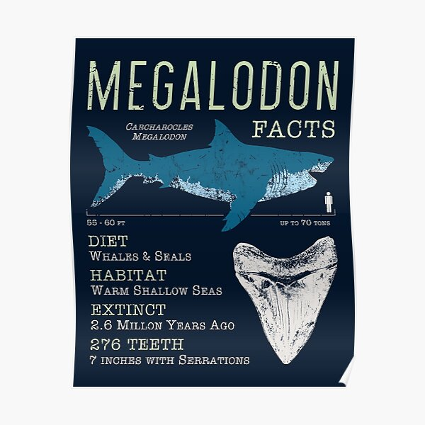 Megalodon Facts Poster