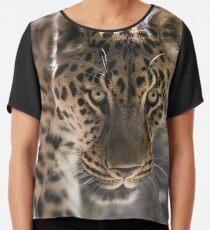 Leopard (Panthera pardus) Chiffontop