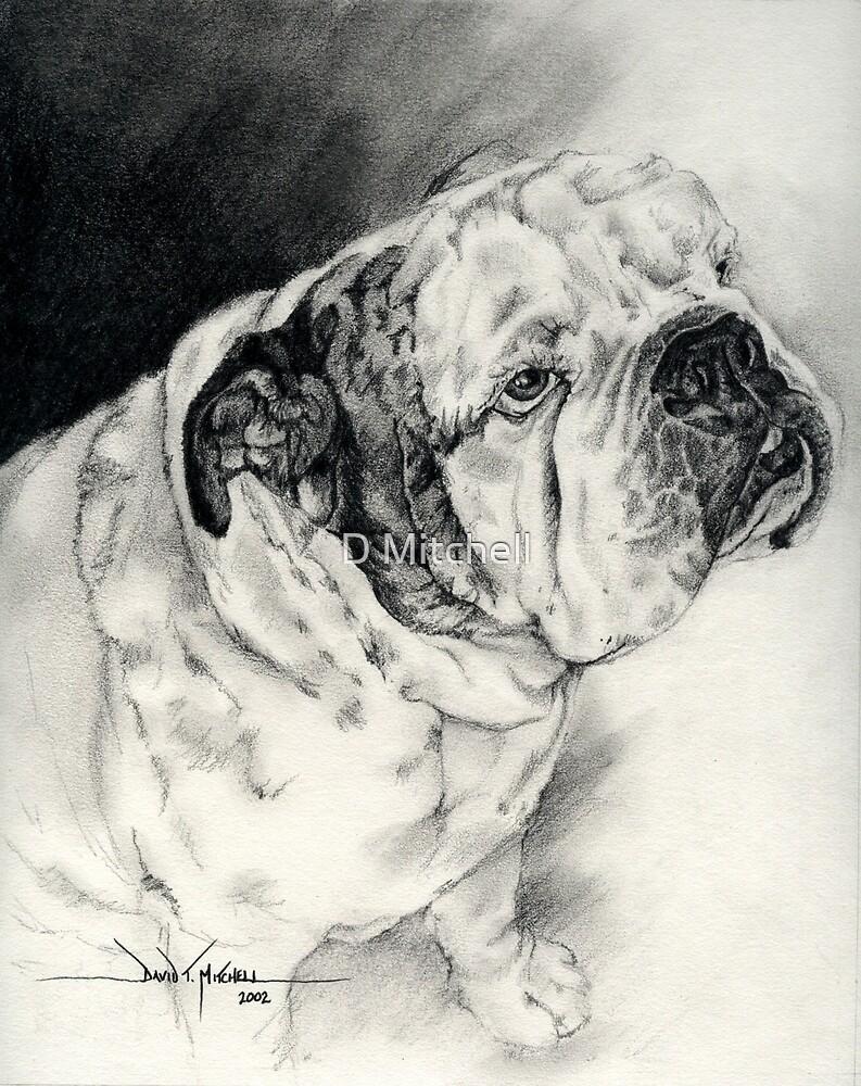 """Otis"" the English Bulldog by David T. Mitchell"