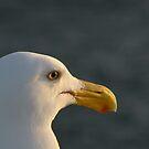 Bird's eye view by Kamila  Jerichow
