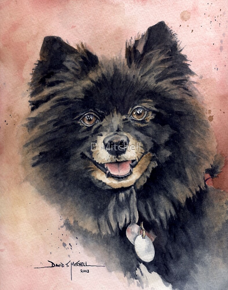 """""""Belle"""" the Pomeranian by David T. Mitchell"""