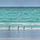 Falkland Islands Seascape with Birds by KateMcCSeattle