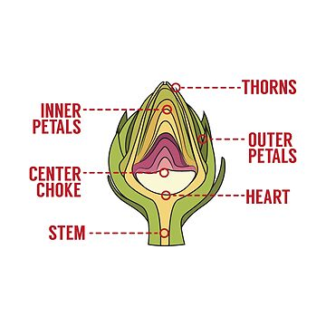 Anatomy Of An Artichoke - Artichokes Gift by yeoys