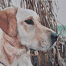 Bailey by Marlene Piccolin