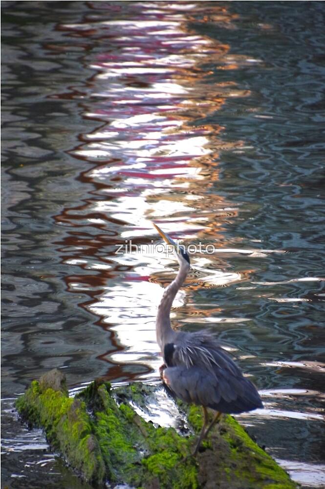 Resting bird by zihniophoto