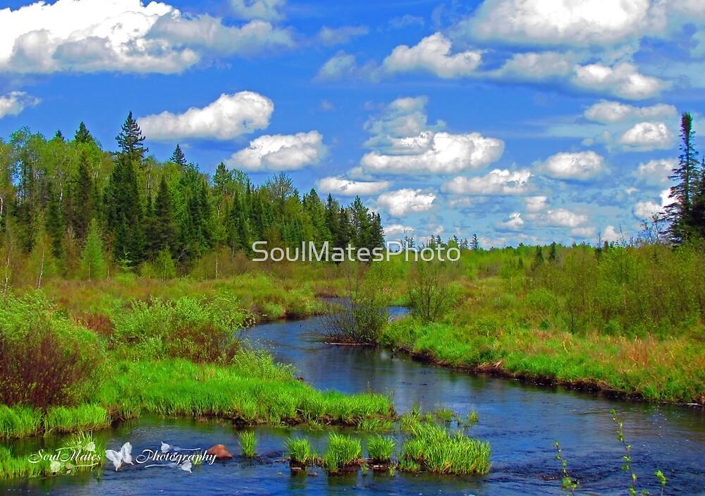 Marsh by SoulMatesPhoto
