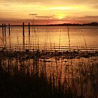 Amelia River Sunset 2 by Bob Hardy
