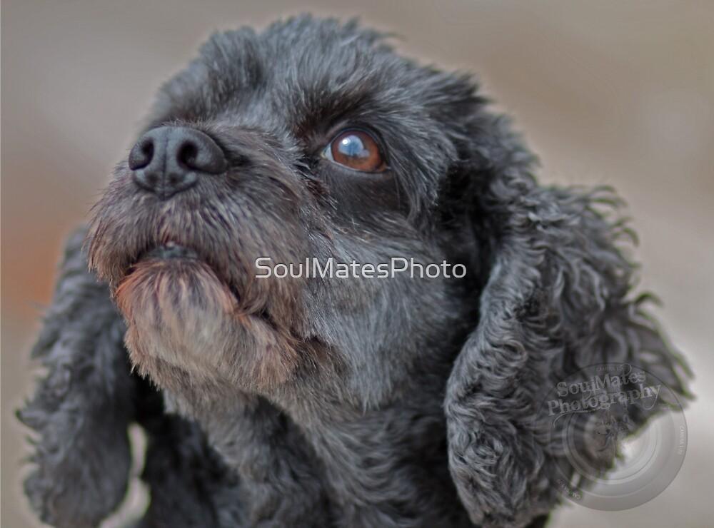 Dog by SoulMatesPhoto