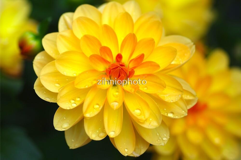 Yellow flower by zihniophoto