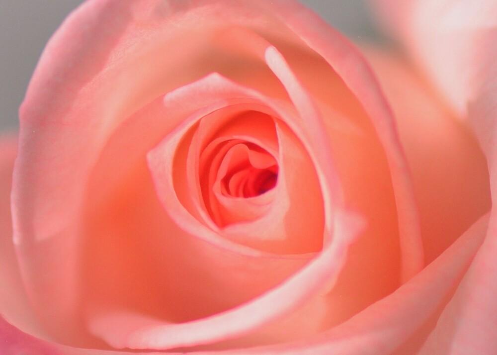 Pink dawn of Mrauk Oo by Brian Bo Mei