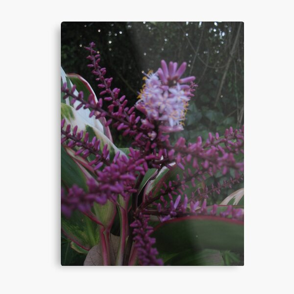 Purple & Green, You Know What I Mean? Metal Print