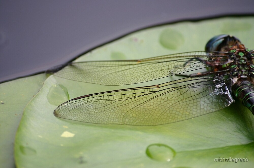Dragonfly on Lilypad by michellegreco