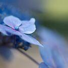 Soft Blue Moment by Lisa Knechtel