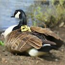 A Mother's Love by Lori Deiter