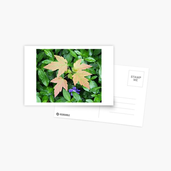 Uninvited Garden Guest Postcard
