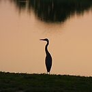 Great Blue Heron - Dusk by Tony Wilder