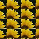 Sunflower by Samantha Dean