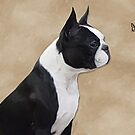 Dylan The Boston by Cazzie Cathcart