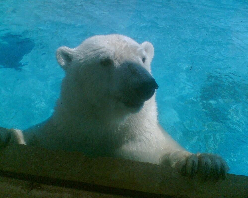 Smiling polar bear by pixiealice