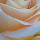 The Silk Rose by Nancy Stafford