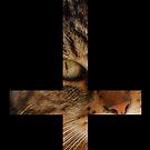 Cat Cross by alightedsylph