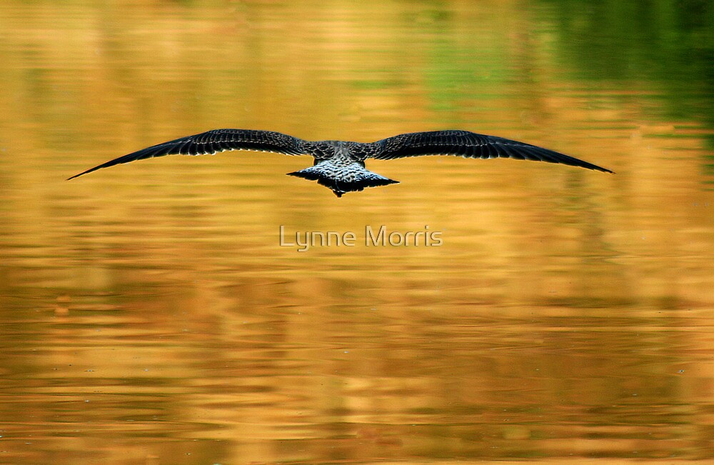 Full Flight by Lynne Morris