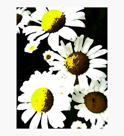 Nur Gänseblümchen Fotodruck