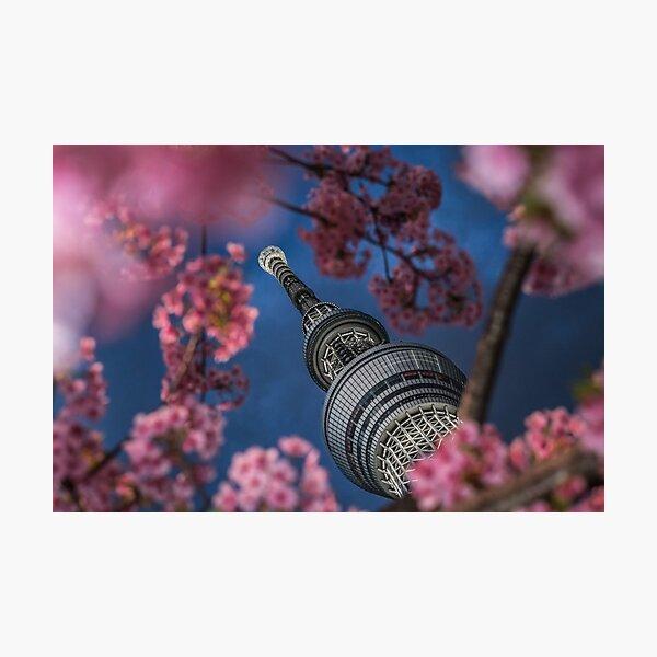 Sakura and the Tokyo Skytree Photographic Print
