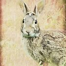 Hare's lookin' at you by vigor