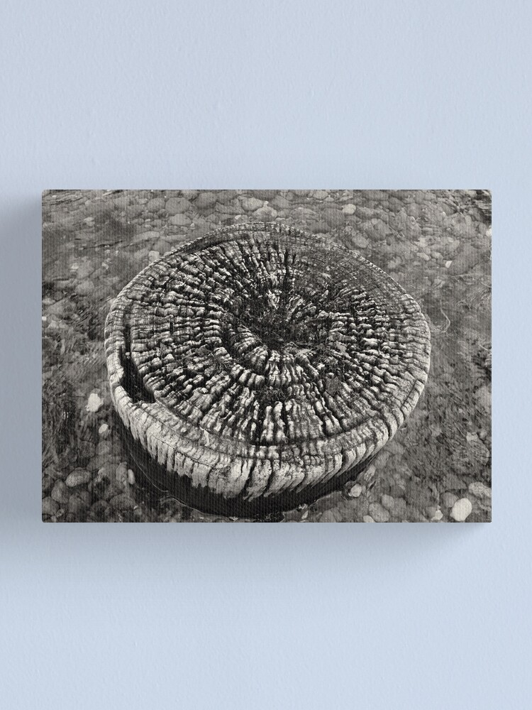 Alternate view of Lost Jetty Canvas Print