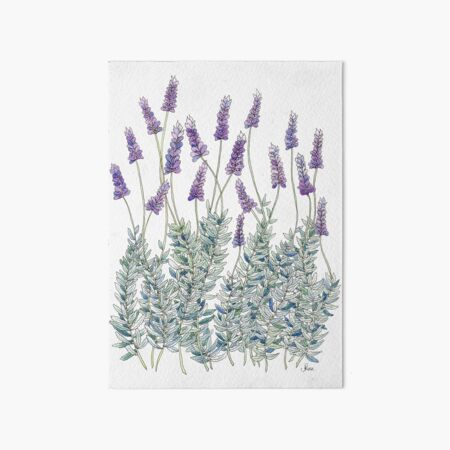 Lavender, Illustration Art Board Print
