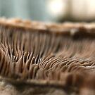 Mushrooms have Radiators by ionclad