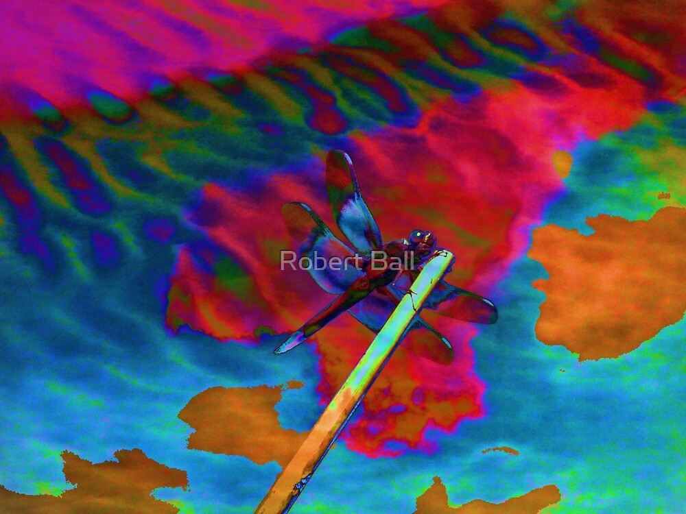 Dragonfly Dreams by Robert Ball