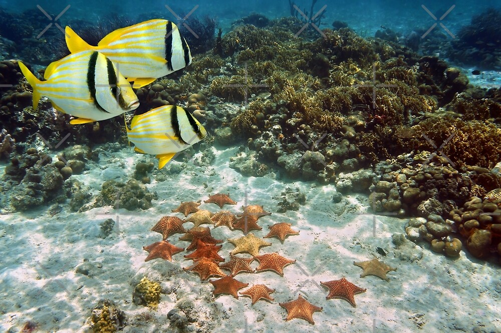 Coral reef with tropical fish and a group of starfish by Dam - www.seaphotoart.com