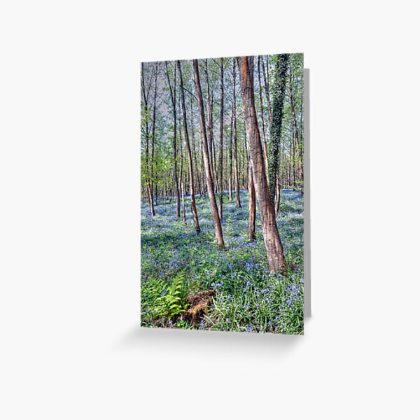 Forest of Dean Bluebells Greeting Card