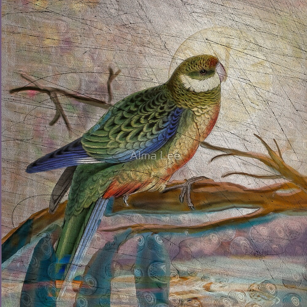 The Stanley Parakeet: inspired by Edward Lear's botanical bird drawing by Alma Lee