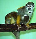 The Wrestling Monkeys by Ryan Davison Crisp